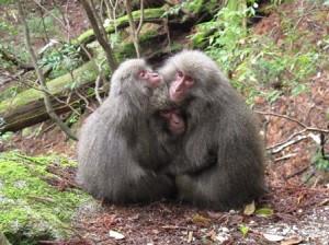 猿団子三兄弟?