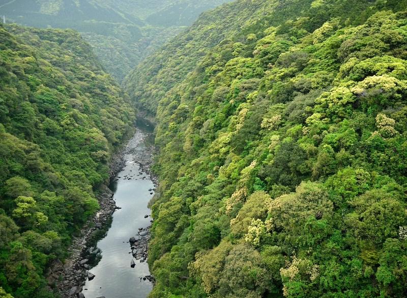 屋久島の新緑