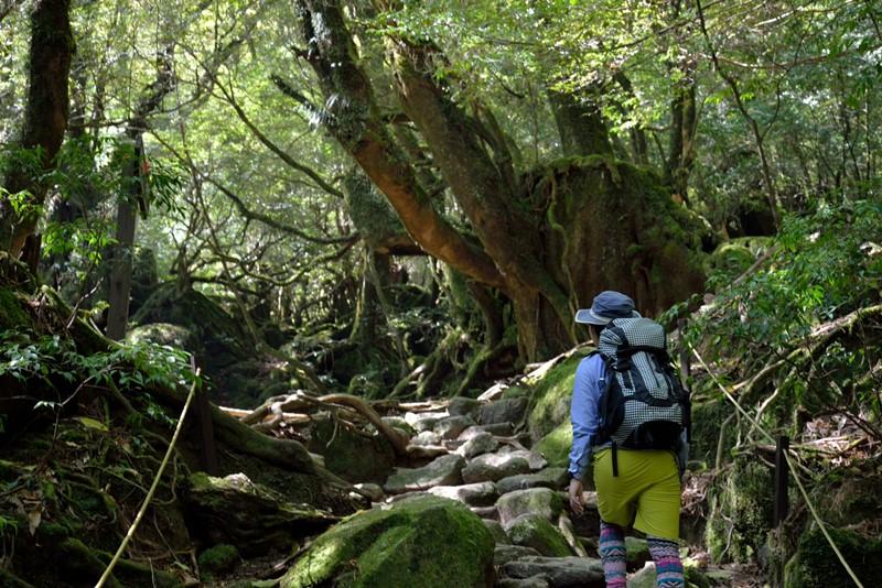 白谷雲水峡苔の森